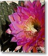 Cactus Flower  Metal Print