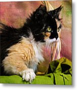Calico Cat In Basket Metal Print