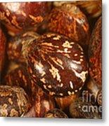 Castor Beans Metal Print