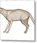 Cat Anatomy, Artwork Metal Print