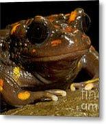Chilean Mountains False Toad Metal Print