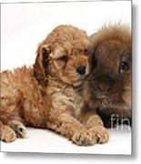 Cockerpoo Puppy And Rabbit Metal Print