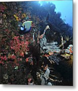 Colorful Reef Scene With Coral Metal Print