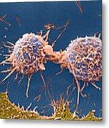 Coloured Sem Of Cervical Cancer Cells Dividing Metal Print
