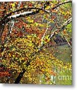 Fall Along West Fork River Metal Print