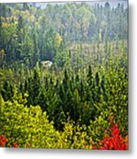 Fall Forest Rain Storm Metal Print