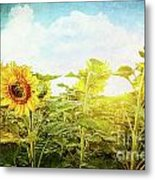 Field Of Colorful Sunflowers And Blue Sky  Metal Print