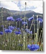 Field Of Flowers In Rural Landscape Metal Print