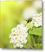Floral Background. Lantana Flowers Metal Print