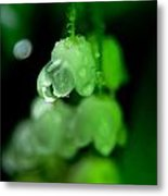 Flower And Drops Metal Print