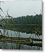 Forest Lake Metal Print