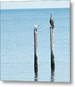 2 Gulls And A Pelican Metal Print