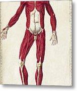Historical Anatomical Illustration Metal Print