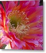 Hot Pink Cactus Flower Metal Print