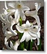 Hyacinth Named Aiolos Metal Print