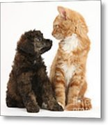 Kitten And Puppy Metal Print