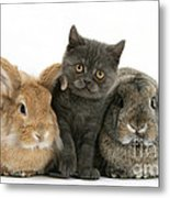Kitten And Rabbits Metal Print