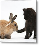 Kitten And Young Rabbit Metal Print