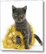 Kitten With Tinsel Metal Print