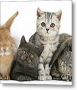 Kittens And Rabbits Metal Print