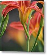Lady Orange Lily Metal Print