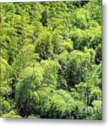 Lush Bamboo Forest Metal Print