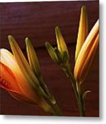 Orange Daylily Metal Print