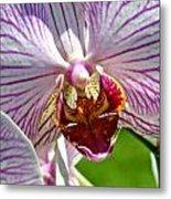 Orchid Flower Metal Print