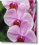 Orchid Flowers Metal Print by Duncan Smith