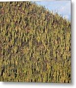 Organ Pipe Cactus Stenocereus Thurberi Metal Print