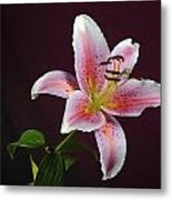 Oriental Lilly Metal Print