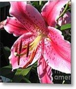 Oriental Lily Named Tiber Metal Print
