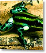 Pasco Poison Frog Metal Print