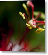 Passiflora Flower Metal Print by Zoe Ferrie