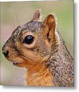 Pine Squirrel Metal Print