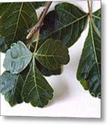 Poison Oak Branch Metal Print