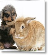 Puppy And Rabbit Metal Print