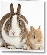 Rabbit And Baby Bunny Metal Print