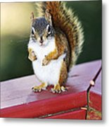 Red Squirrel On Railing Metal Print
