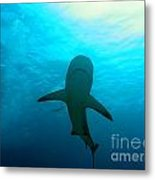 Reef Shark Metal Print