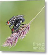 Reproduction - At The Height Of Bliss Metal Print