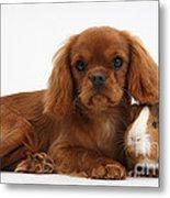 Ruby Cavalier King Charles Spaniel Pup Metal Print