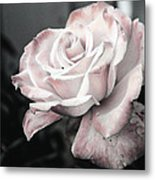 Secret Garden Rose Metal Print