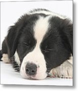 Sleepy Puppy Metal Print