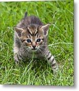 Small Kitten In The Grass Metal Print
