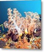 Soft Coral On A Reef Metal Print