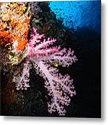 Soft Coral Seascape, Fiji Metal Print