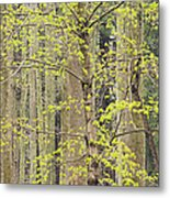 Spring Forest Metal Print