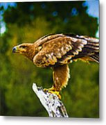 Steppe Eagle Metal Print