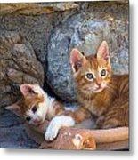 Sweet Cats Metal Print